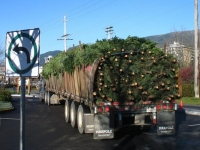 Flatbed truck 55' long  !    800 + trees of all sizes &amp; varieties.